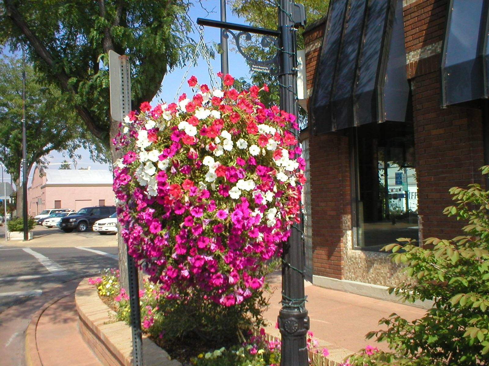 Street Flower Planters in Idaho Falls
